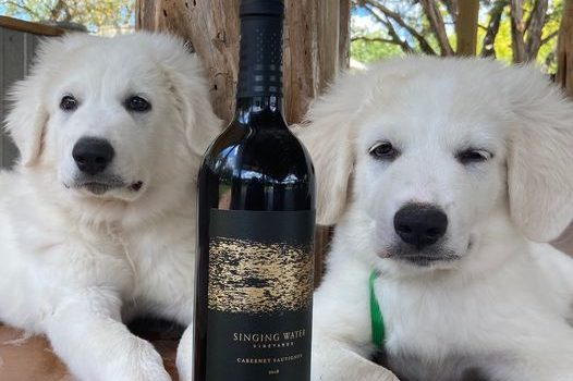 Two dogs and bottle of wine