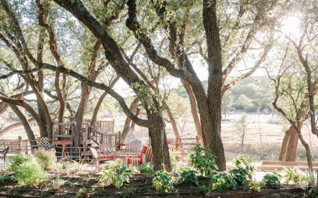 Trees over patio in Singing Water Vineyards
